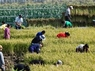 農業法人(株)ふるさとファームのプレスリリース2