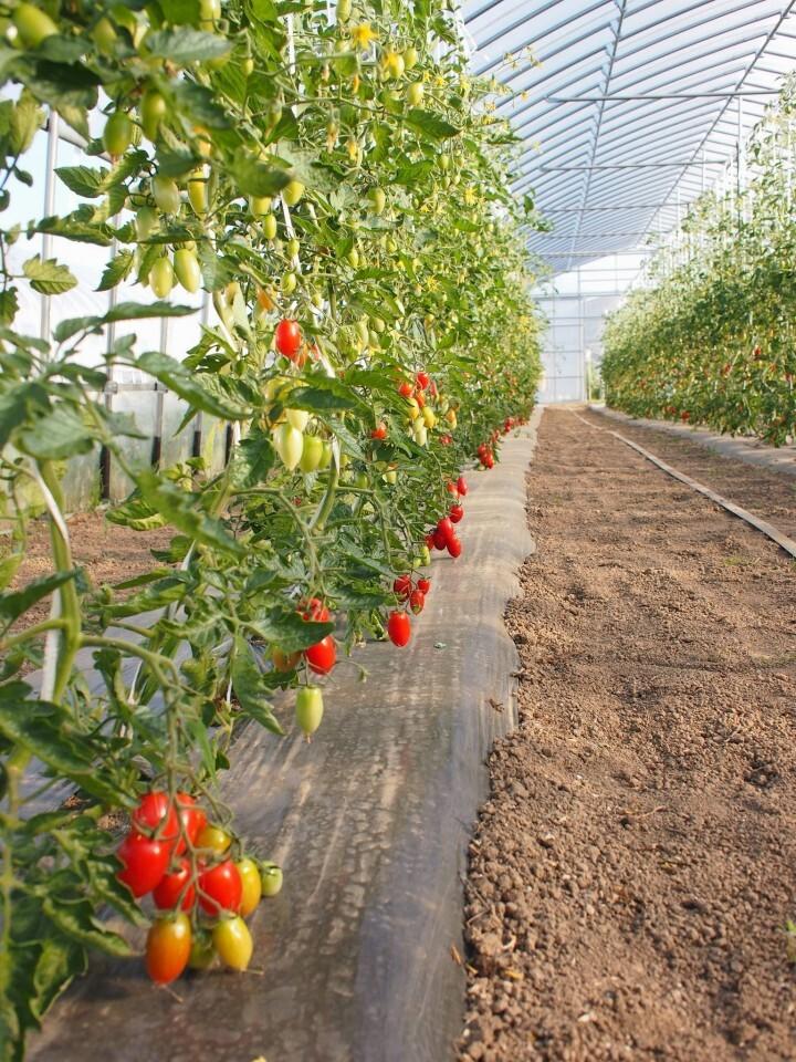 農業法人(株)ふるさとファームのプレスリリース画像3