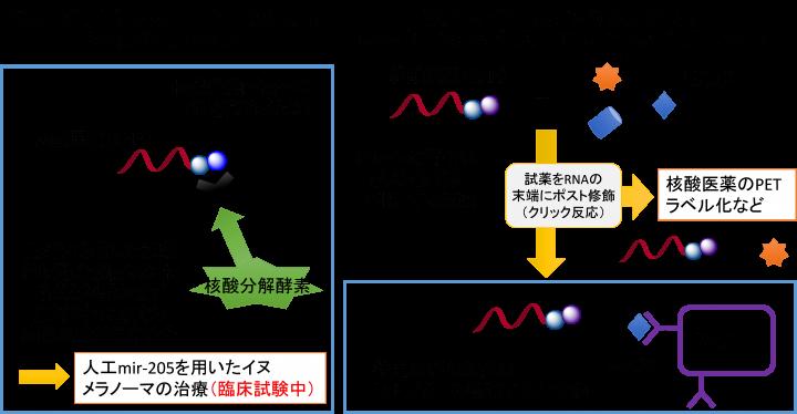 国立大学法人 岐阜大学のプレスリリース画像1