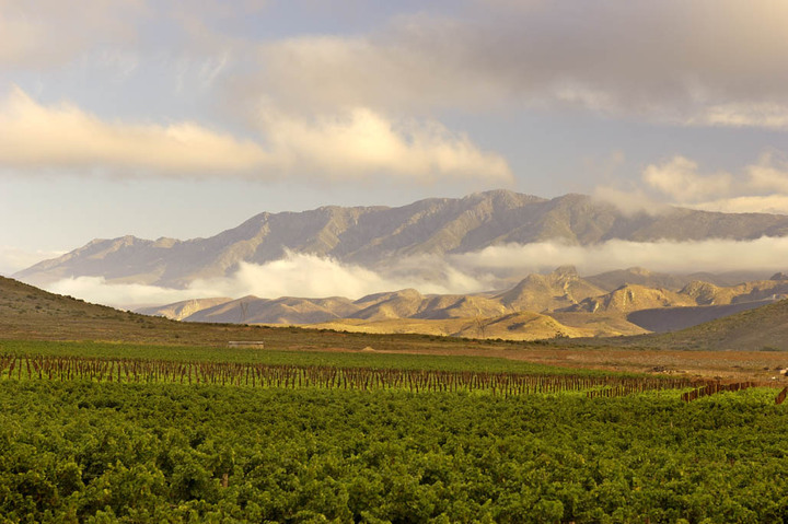 G.Beck Robertson vineyards002.jpg