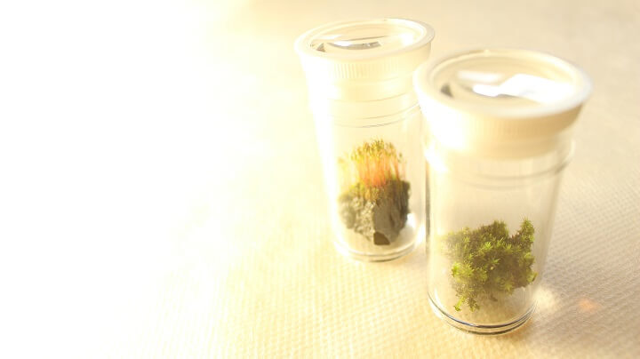 小さな苔を自宅で観察するのに最適