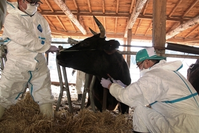 一般社団法人東京電力福島第一原子力発電所の事故に関わる家畜と農地の管理研究会のプレスリリース画像2
