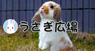 秋田 潤のプレスリリース1