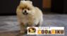 有限会社 Coo&RIKUのプレスリリース3