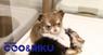 有限会社 Coo&RIKUのプレスリリース5