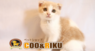 有限会社 Coo&RIKUのプレスリリース11