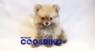 有限会社 Coo&RIKUのプレスリリース10