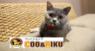 有限会社 Coo&RIKUのプレスリリース2